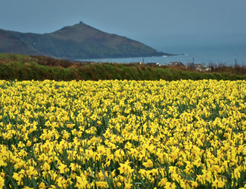 The Daffodil Principle and Your Office Environment