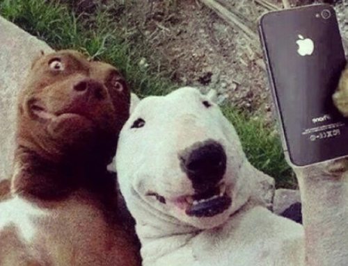 Why You Smile in Selfies: A Marketing Lesson